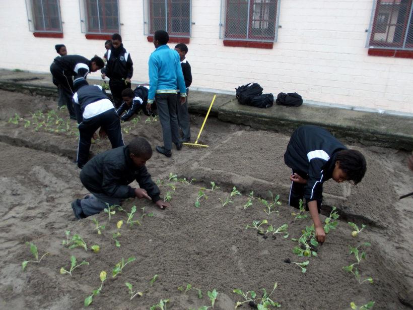 Afrique du Sud : Dessine-moi un jardin