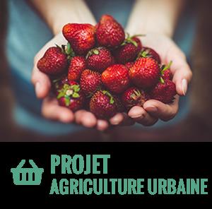 Notre projet d′agriculture urbaine
