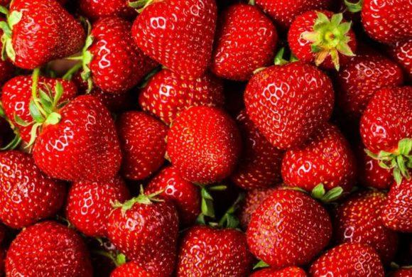 Des fraises du Québec toute l'année