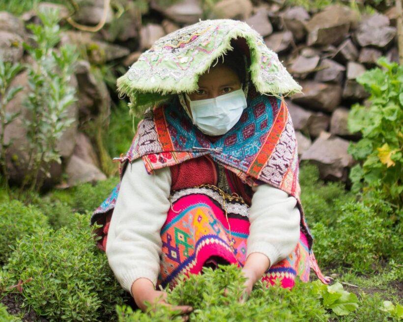 Notre nouveau projet d'autonomie alimentaire au Pérou